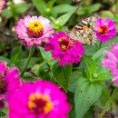 Schmetterlingstreff 100g
