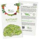 Blattsalat - Schnittsalat