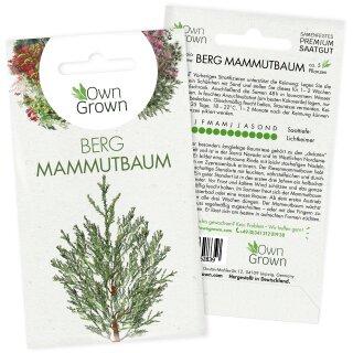 Berg Mammutbaum