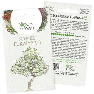 Schnee-Eukalyptus
