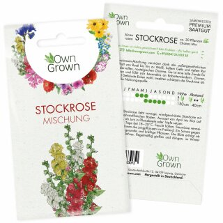 Stock-Rose
