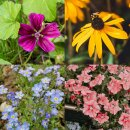 Blumen Beet 10er Saatgut-Set